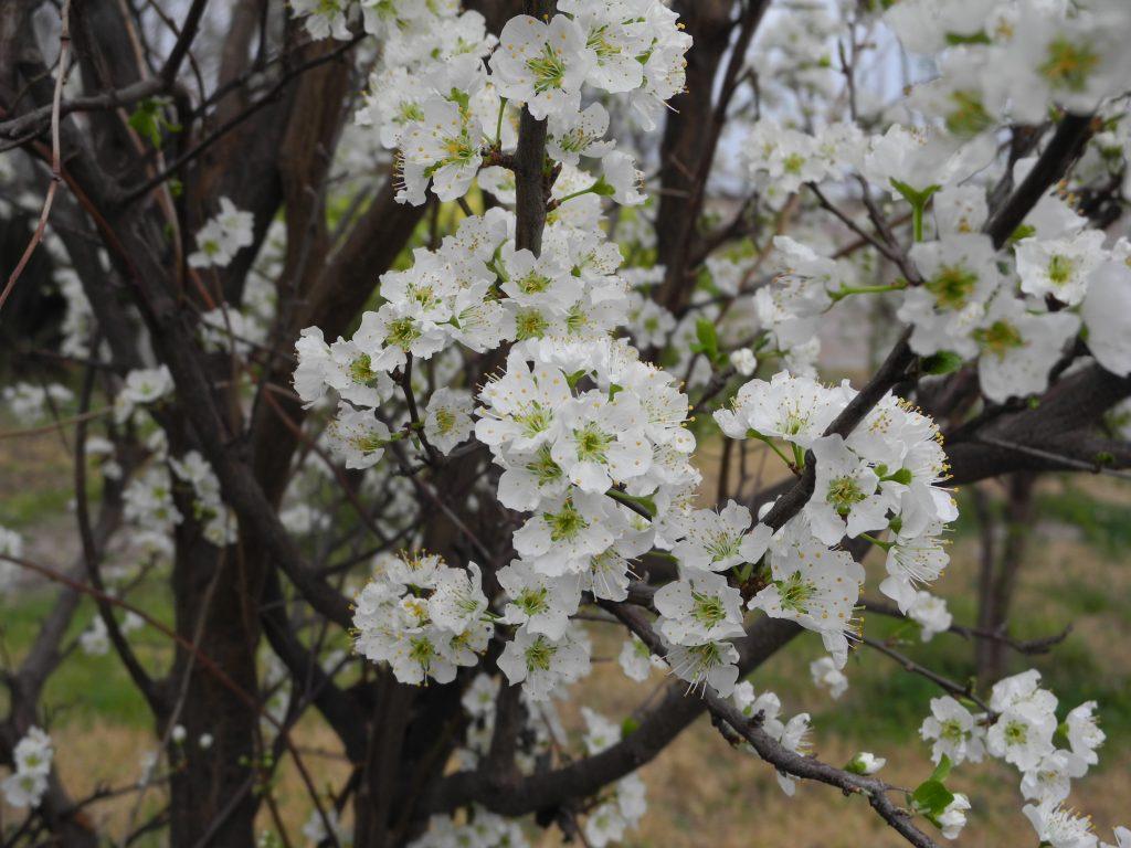 ternura flores